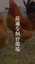 最適な飼育環境